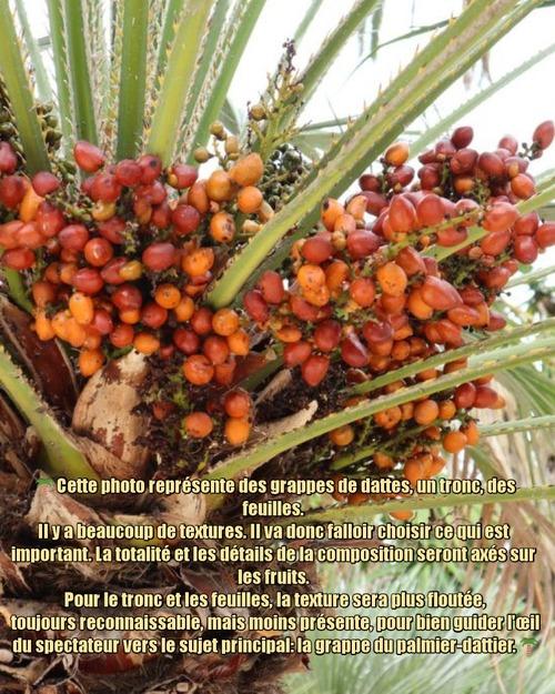Dessin et peinture - vidéo 3334 : Comment peindre les dattes (fruits des palmiers) ? - aquarelle.