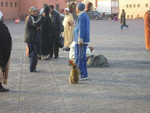 marrakech_place__010