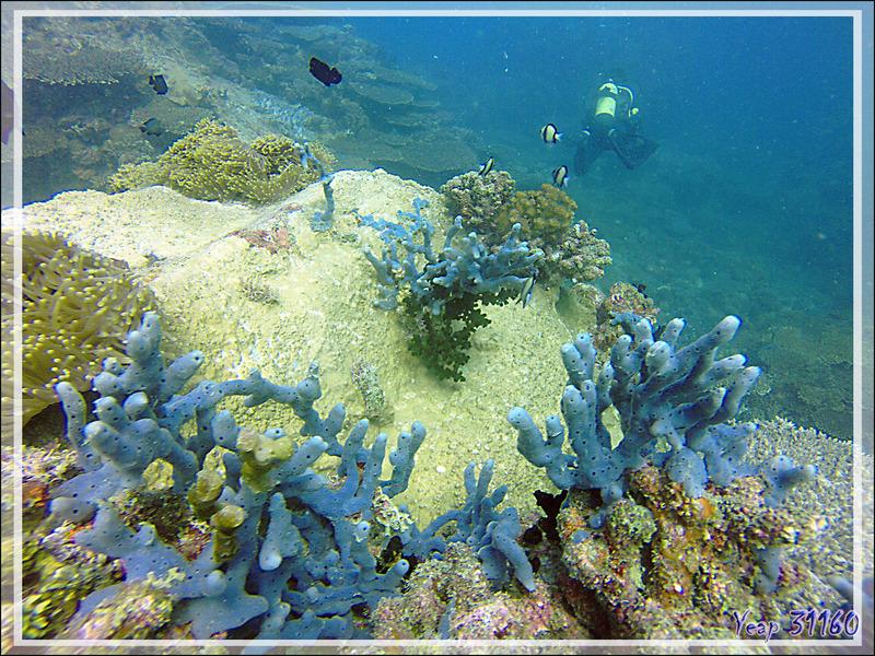 Au fond, où que l'on plonge, c'est toujours aussi beau ! - Nosy Tsarabanjina - Nosy Mitsio - Madagascar