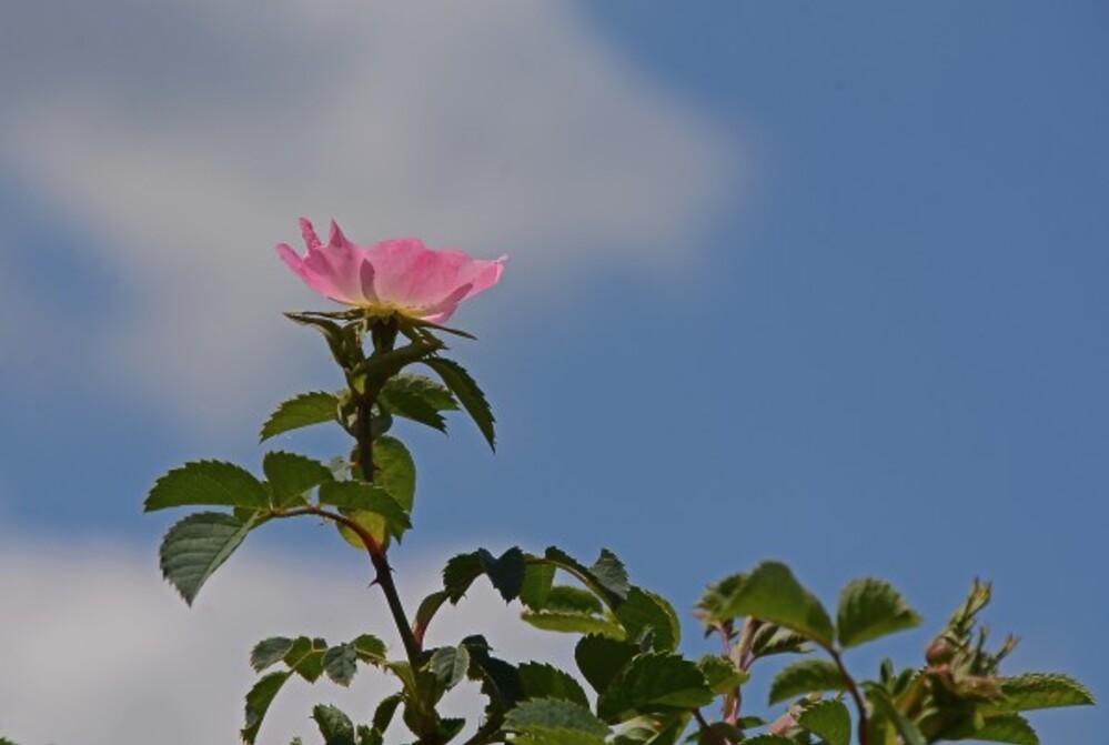 Fleurs-13-7436.jpg