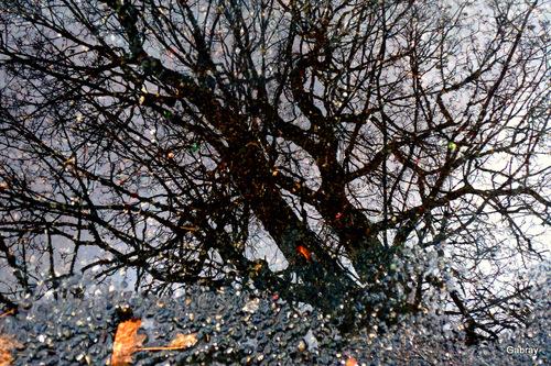 Après la pluie: des flaques!