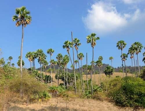 Patrimoine mondial de l'Unesco : Le parc national de Komodo - Indonésie -