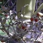 Des plantes rares - Photo : Mistouflette