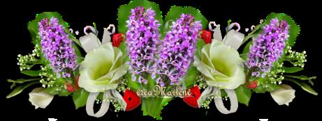 L'Orchidée des marais