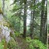 Passage près de deux arbres frontière avec les troncs peints