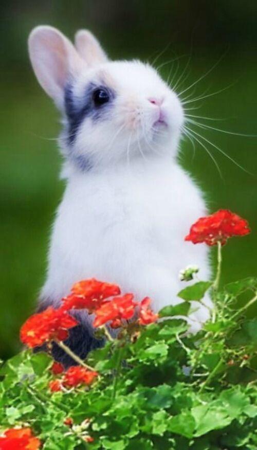 Drôles de petits lapins