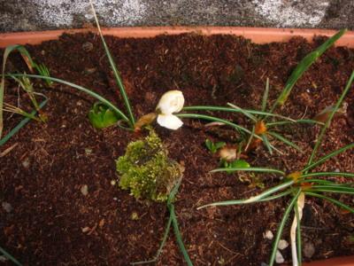 Blog de melimelodesptitsblanpain : Méli Mélo des p'tits Blanpain!, Février (2013): Prémices de printemps mais hiver toujours présent!