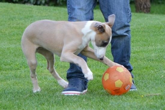 jack et le ballon