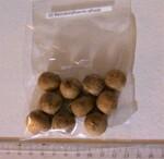 3 - graines de palmiers - suite