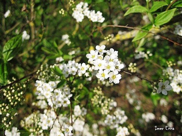Fleurs-3137.JPG