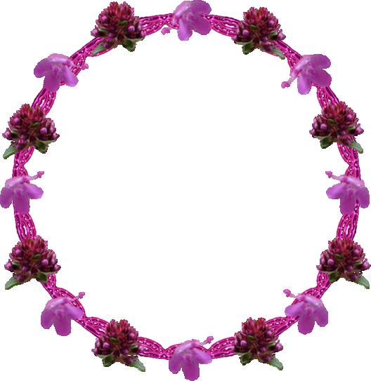 Cluster serpolet