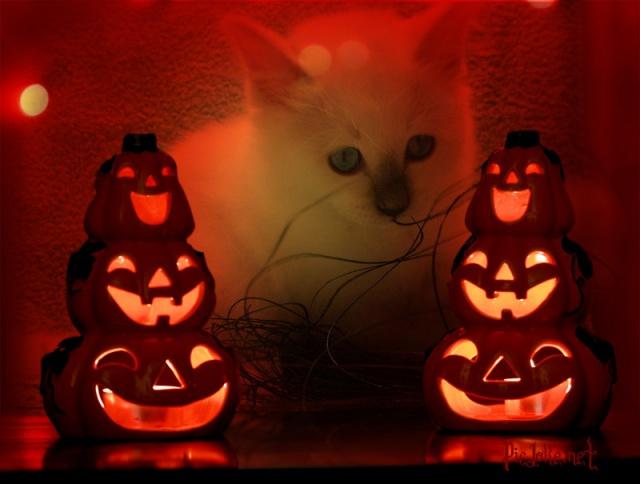 ► Halloween