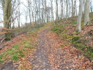 Forêt domaniale d'Arques