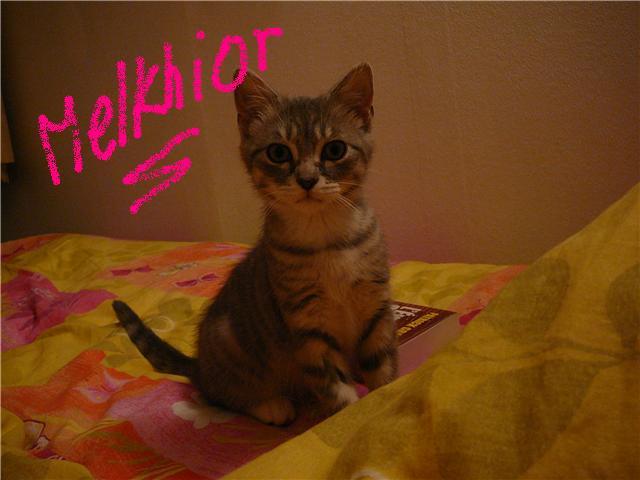 Le petit Melkhior [4]