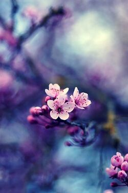 Virágos képek
