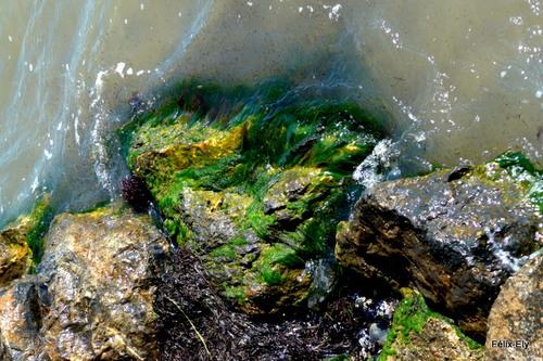 Rochers et algues