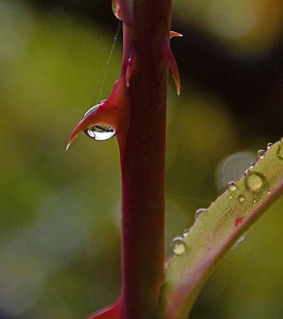 Les charmes de la pluie