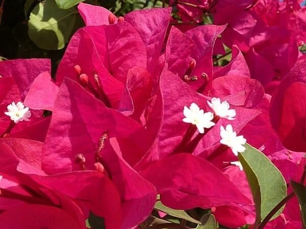 fleurs-rhodes-9a.jpg