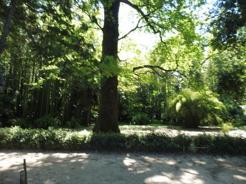 La bambouseraie en Cévennes gardoises.