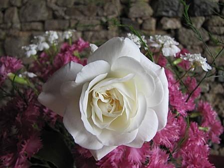 fleurs de chez ma grand mére (3)