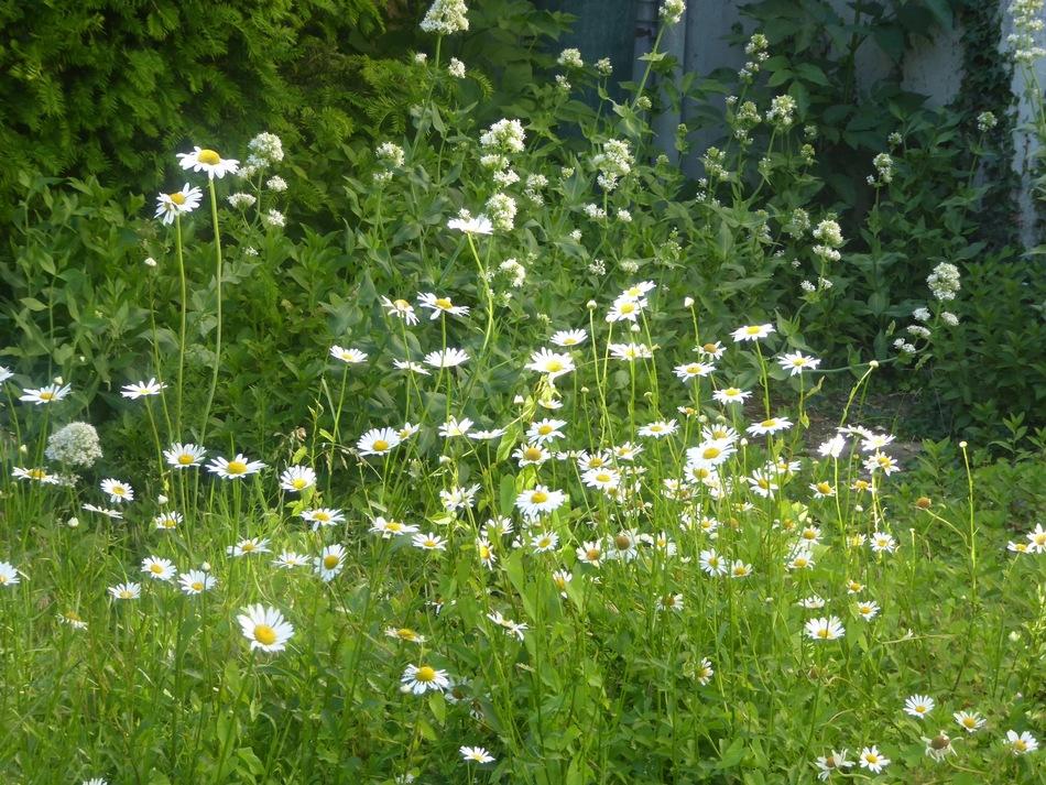 De tout et de rien dans le jardin aujourd'hui!