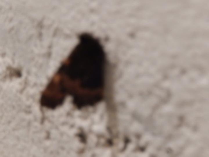le papillon, le maître de sa métamorphose