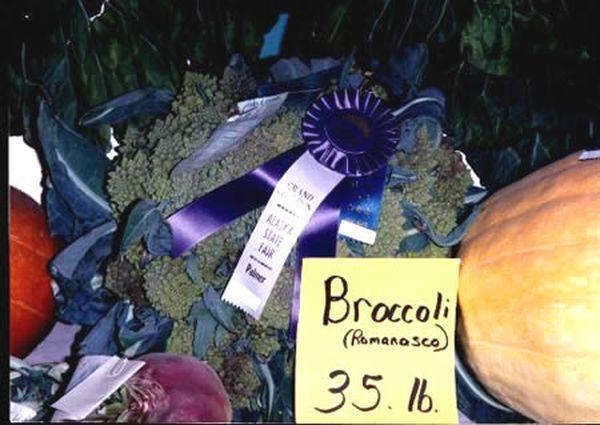 a422_Broccoli_resultat