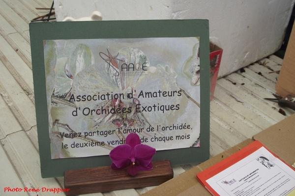 De bien belles orchidées à Villiers le Sec, un clin d'œil de René Drappier....
