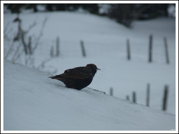 De petits oiseaux.(pour le grand jeu de khanel)