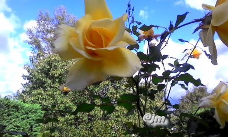 dans les jardins en automne,Reconnaître les fleurs, plantes et arbres,sur chaque photo,voir le nom de la plante