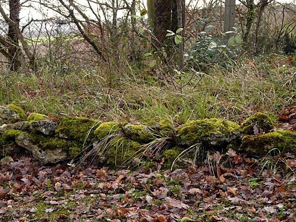 Mousse feuilles