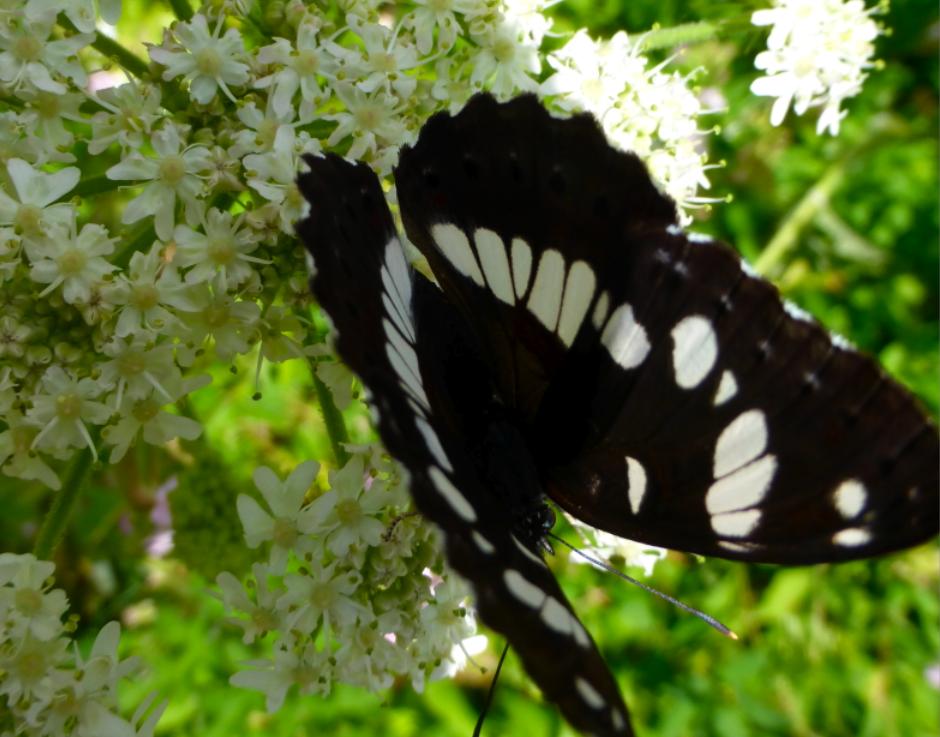 Fleurs et petite, toute petite faune!