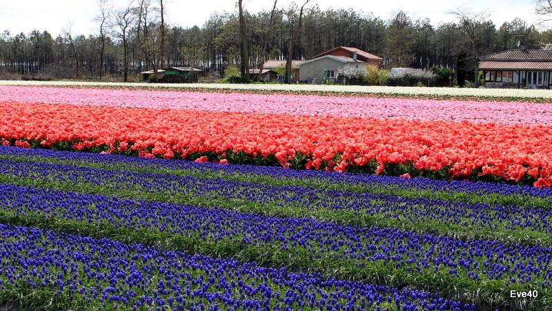 ....Encore des fleurs.....