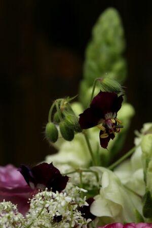 Roses et giroflées