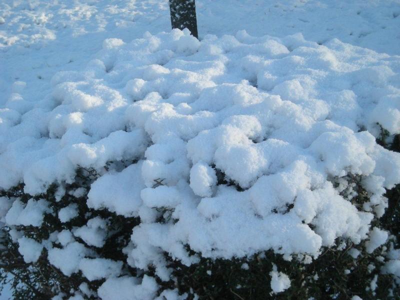 Le flocon de neige ...