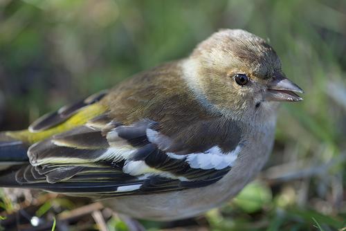 Mon petit oiseau , où t'es - tu blessé ...