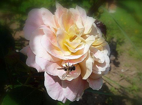 autres-insectes-et-arachnides-plouvien-france-1092343403-12