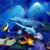 faune sous marine-Marco Lundi