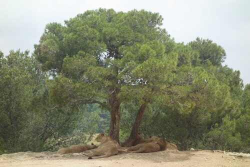 Sigean - RESERVE AFRICAINE