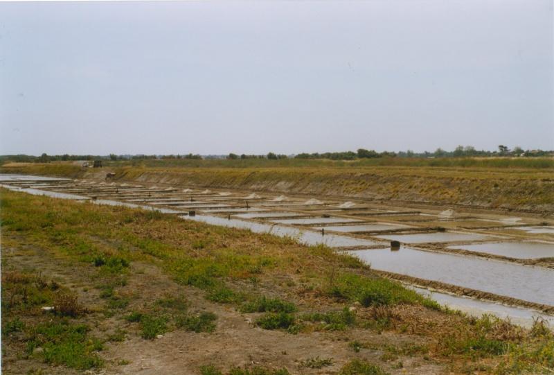 Marais salants dans l'Île de Ré, juin 2005