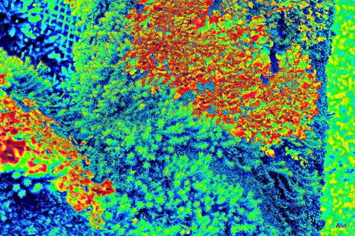 Lichens et jeu de couleurs