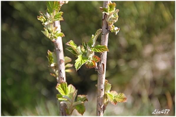 Nature-2-5005-framboisiers.jpg