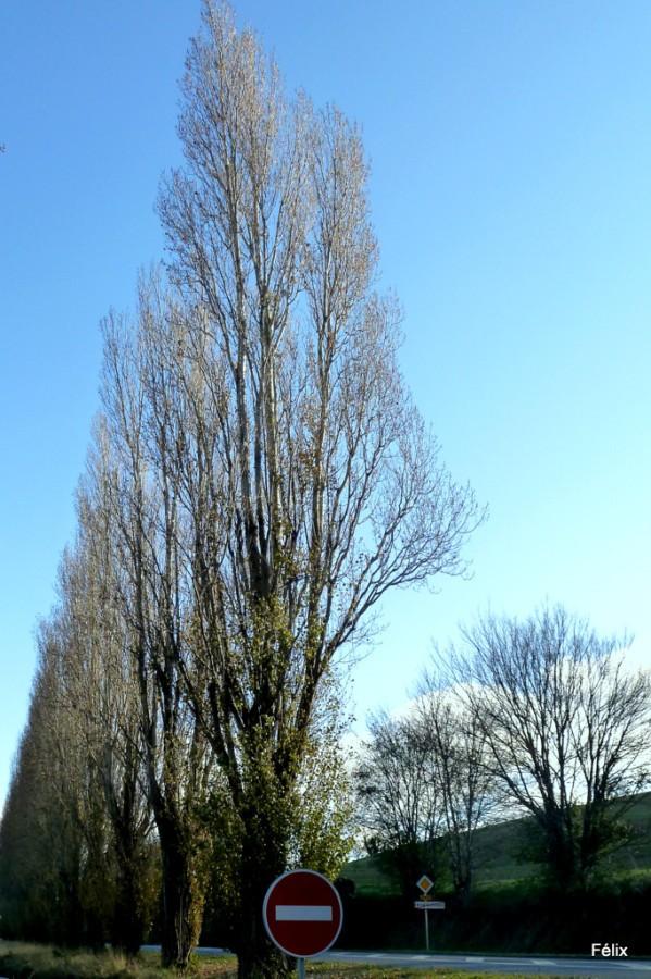 k02---arbre-2.JPG