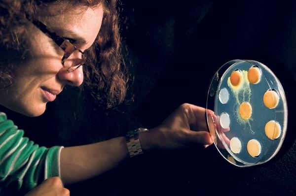 Depuis dix ans, la chercheuse du CNRS Audrey Dussutour mutliplie les expériences sur le blob. Ici, cet organisme unicellulaire étend ses « pseudopieds » et choisit à distance parmi plusieurs régimes alimentaires celui qui est idéal pour sa croissance.