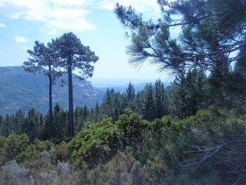 La baie de Pinarello en arrière-plan