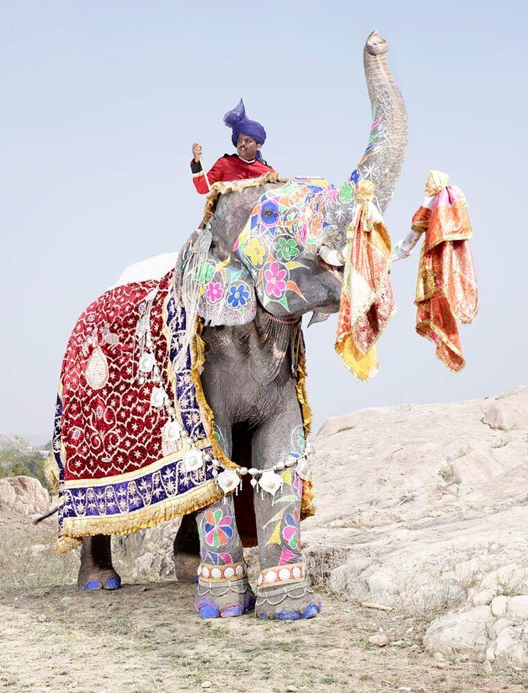 charles-freger-painted-elephants-9