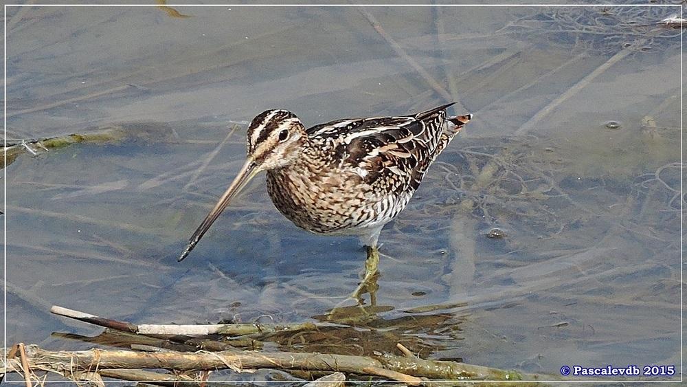Réserve ornithologique du Teich (mars 2015) - 3/8