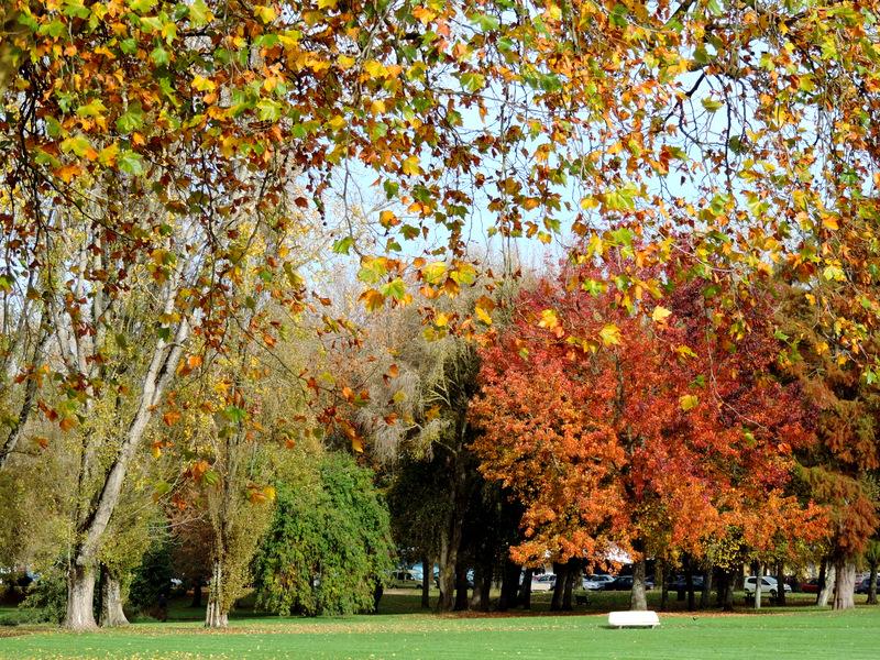 Le Parc Paysager en habits d'automne
