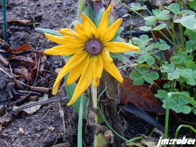 L'hiver, le vent , la pluie et quelques fleurs