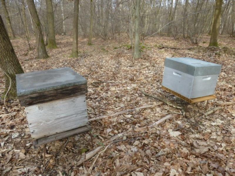 ruches au coeur de la forêt